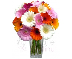 Colorful bouquet of gerberas