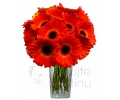 Bouquet of Gerberas - red