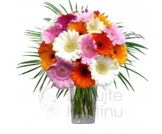 Bouquet of Gerberas + greenery